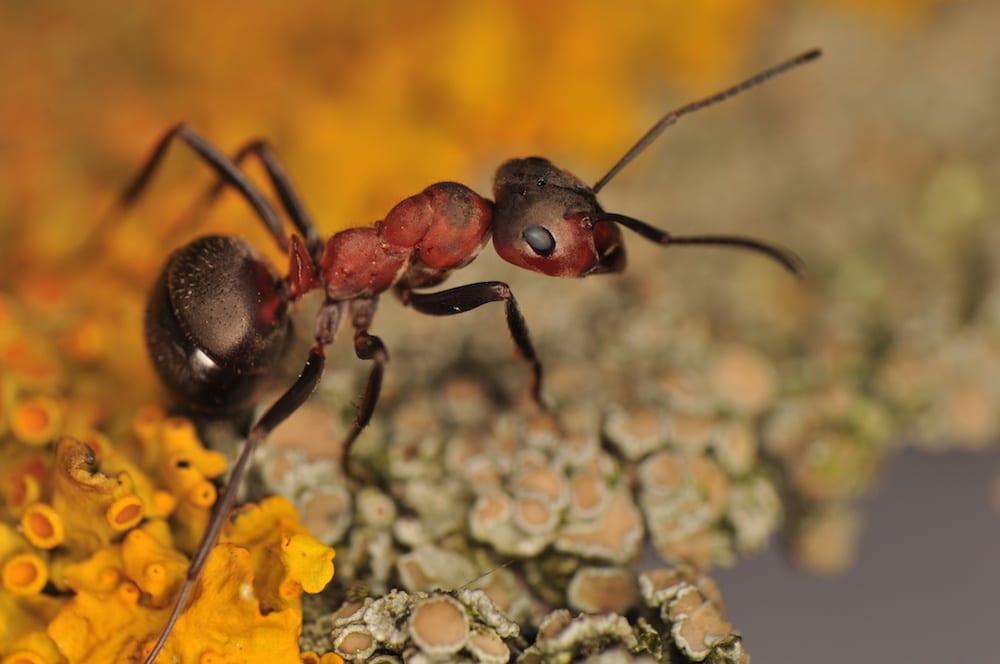 Pest Control Albuquerque NM